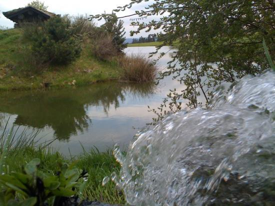 Les étangs de Bergougnoux